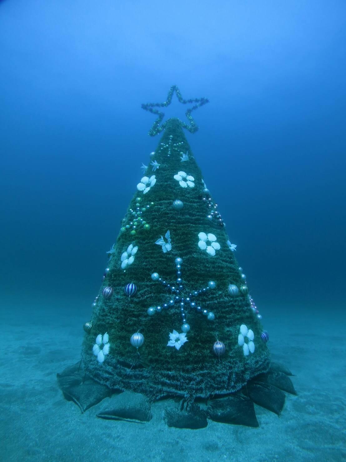 陸も水中もクリスマスですね〜(^^)