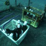 伊豆大島「お酒を水中に沈めよう」ツアー♪